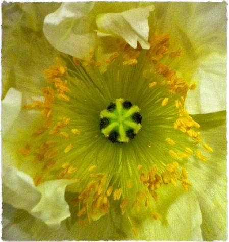 FlowerBurstBrushupSquare 2