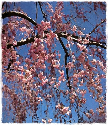 CherryBlossoms2Bokeh1horzflip 2