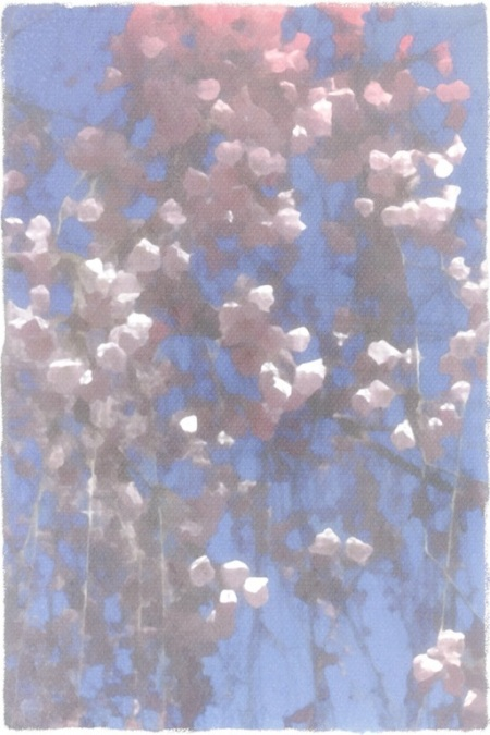 ImpressionistCherryBlossomsFinal