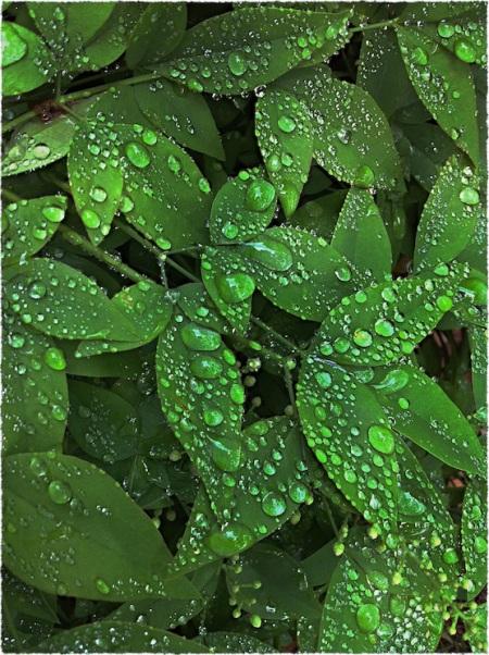 WetFoliageBokeh3MidtoneSharpenGrainFrayed 2