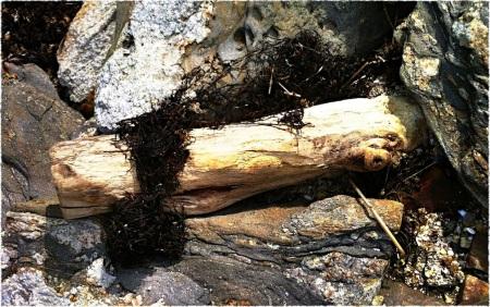 DriftwoodBokeh2GrainMidtoneSharpenFrayed 2