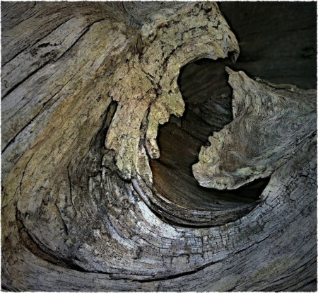 Driftwood3Bokeh3VignetteSharpenMidtoneGrainFrayed 3