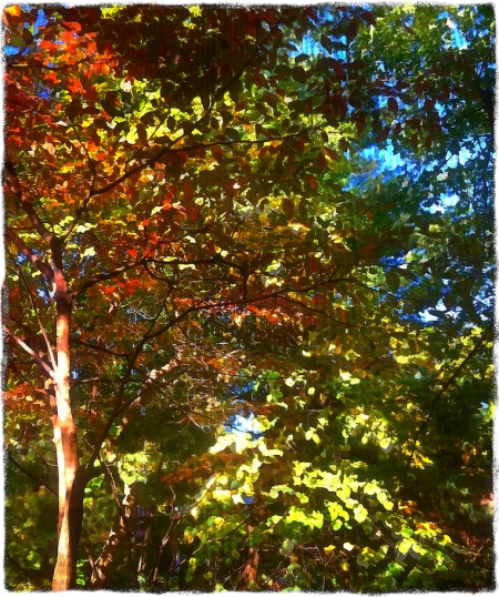 AutumnViewFromPorchBokeh1Bokeh2GlowMidtoneGrit 2
