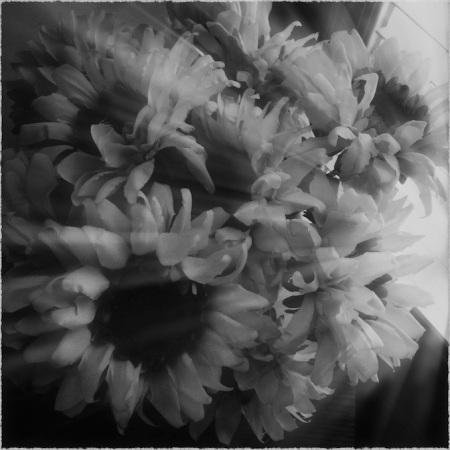 HipstaBWsunflowersGlowGrainFrayedRays3 2