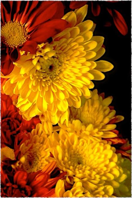 Flowers2Bokeh2MidtoneGrainSharpenGlowFrayed 2