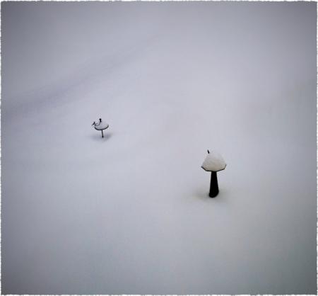 SnowpocalypseSharpenBokeh1Frayed 2