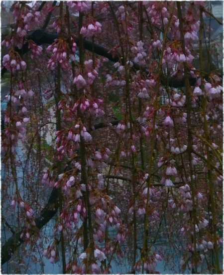 CherryBlossomsComposite1
