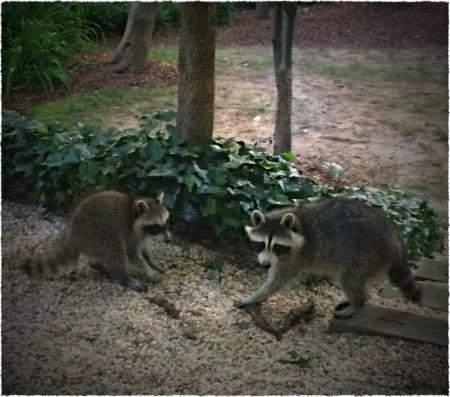 Raccoons3Bokeh3MidtoneSatFrayed 2