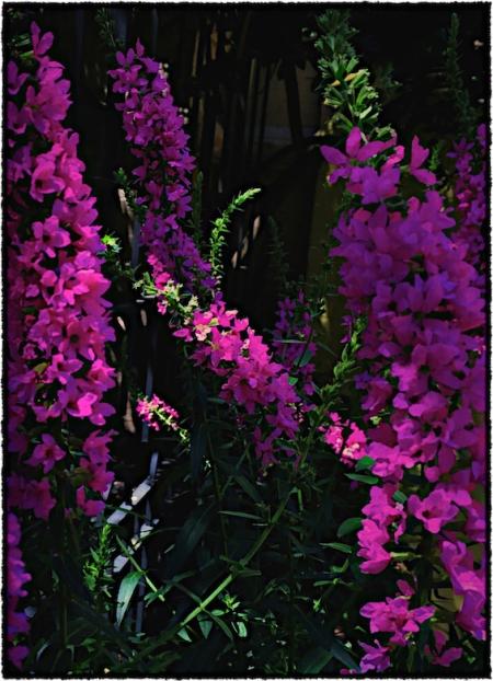 Flowers2Bokeh3GrainMidtoneSharpenFrayed 2