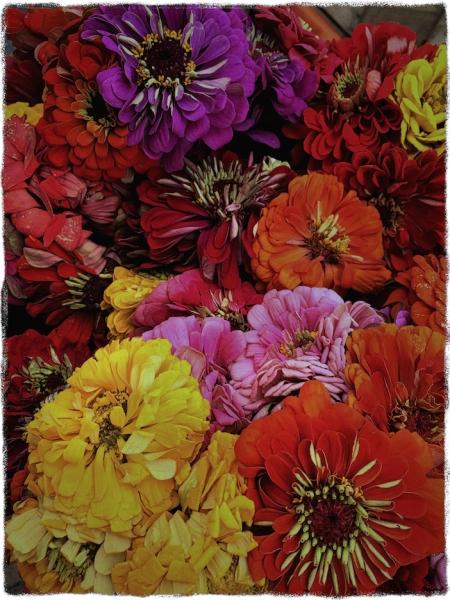 FlowersCandidate1_2AbsoClearMicroSharpCrispBokeh2Grit 2