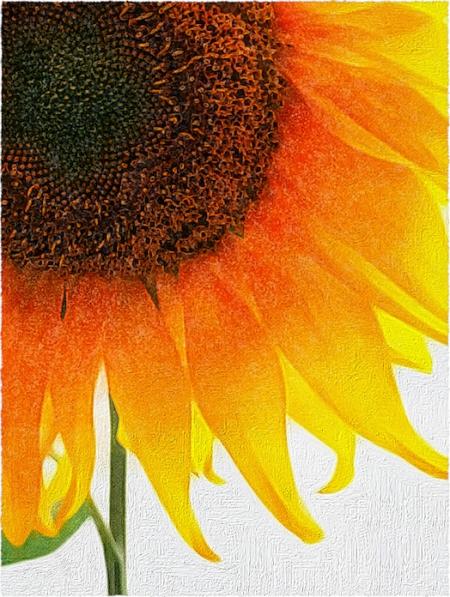 SunflowerOverpaintEnfusion2Bokeh2GrainFrayedIntensify5Rebordered 2