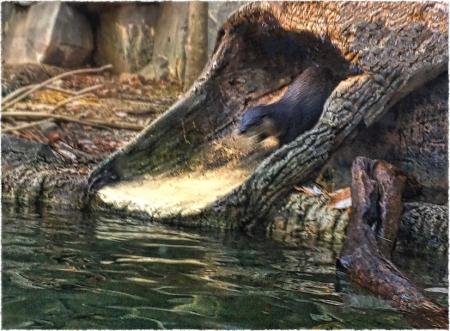 OtterSlideEnfusion1Frayed