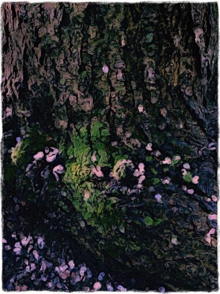 BlossomsOnBarkAlt