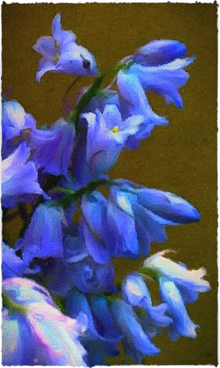 BlueBellsComposite2Brushup 2