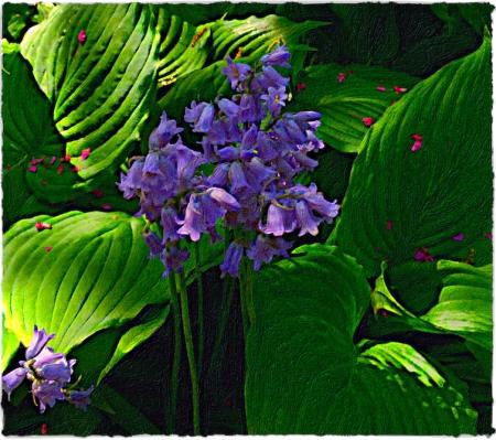 BlueBellsHostasRedbudPetalsBokeh3MidtoneSharpenSatVibBrushup 2