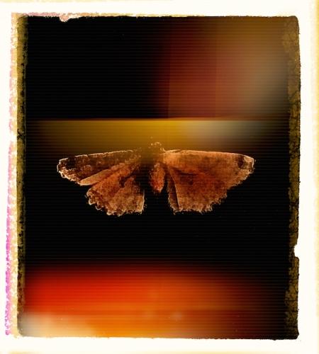 Moth1Final1Snapheal 2