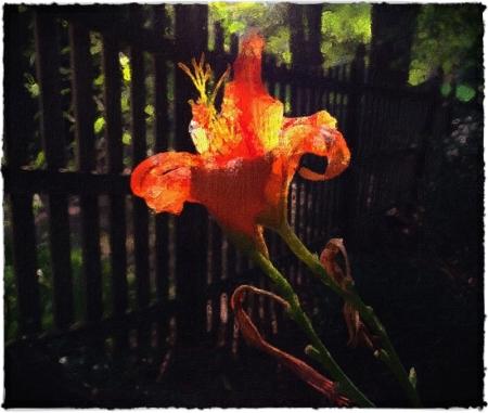Lily17Bokeh3Brushup 2