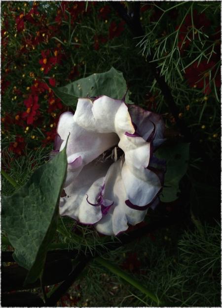 HiddenBlossom 2