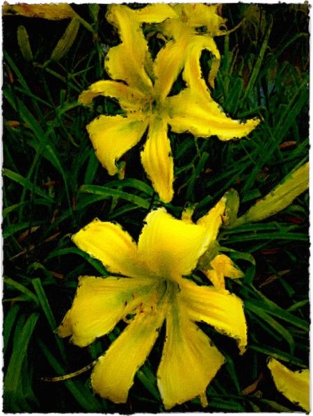 YellowDayLiliesOverpaintFlare2 2