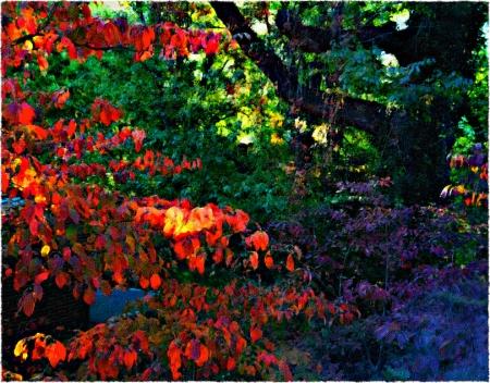 AutumnSunsetDogwoodLeaves2SnaphealFlareFrayed3 2