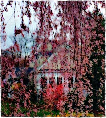 CherryBlossomsInSpringRainFlareGrit 2.jpg