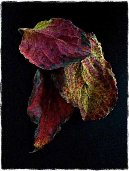 AutumnalNoir 2.jpeg