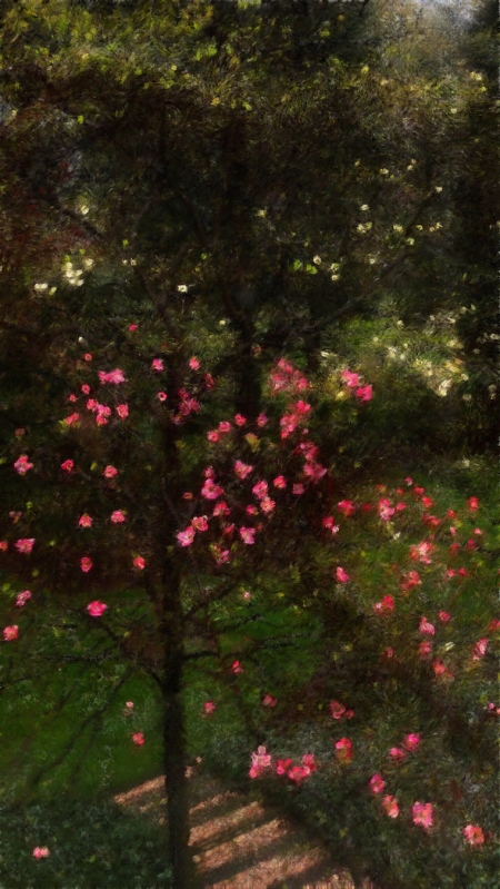 SpringRainEnfusion1 2 2.jpg